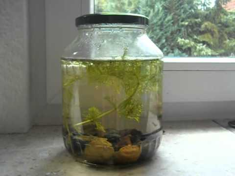 how to make tabletop biosphere