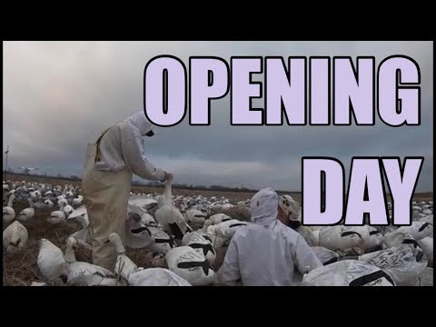 Opening Day Snow Goose Hunt Conservation Season