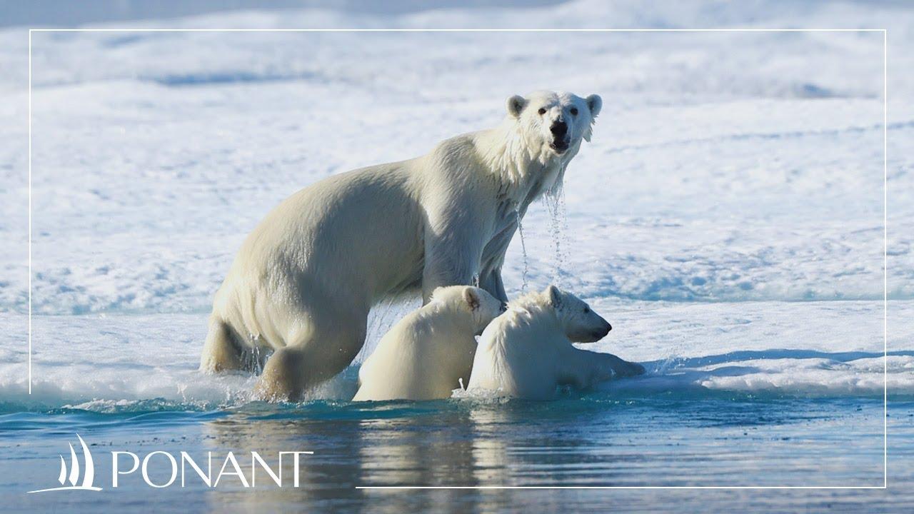 site de rencontre au Groenland Sie sind nicht mit matchmaking Servern verbunden CS aller