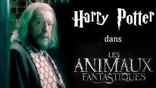 10 personnages Harry Potter que l'on pourrait voir dans les Animaux Fantastiques