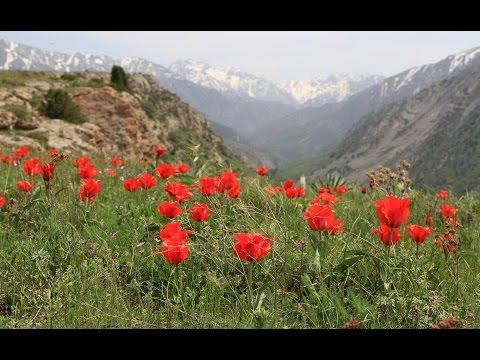 Kazakhstan (1/6): Aksu-Zhabagly region