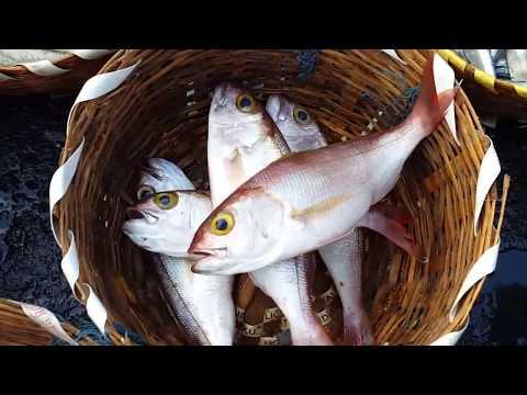 Kasimedu largest fish market in chennai | India street food | chennaifootra