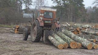 T-40 winch va belkurak bilan o'rmon ichida ishda traktor