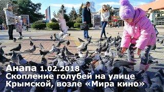 Анапа 1.02.2018. Скопление голубей на улице Крымской, возле кинотеатра «Мир кино» в Анапе