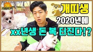 2020년 경자년 신년운세 개띠 알아두면 좋은 소식 총정리