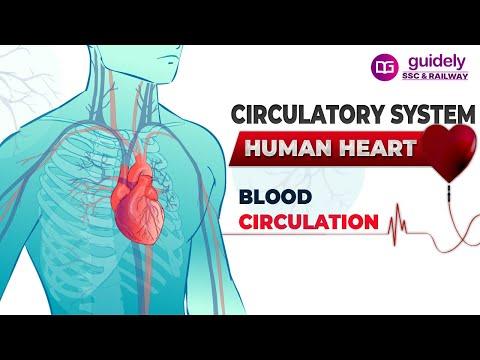 CIRCULATORY SYSTEM - HUMAN HEART !! thumbnail