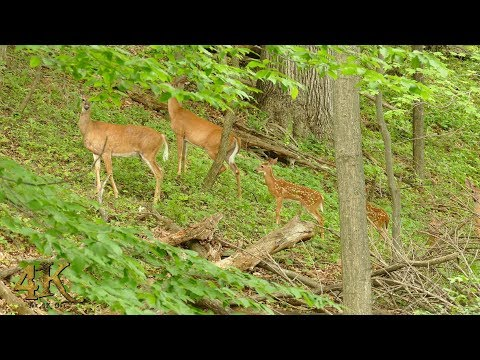 One hour 4K footage of July nature and wildlife in Canada