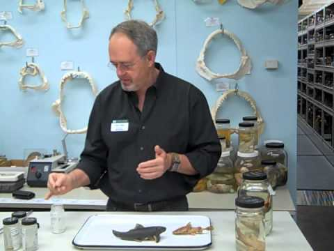 Behind The Scenes In The Museum's Ichthyology (fishes) Collection