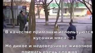 Городская служба контроля за животными г.Харьков