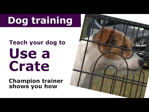 Dog Crate Training: How To Use a Dog Crate
