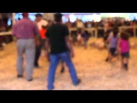 Mack at the Salem County Fair's pig scramble