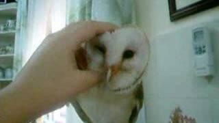 Owl 3/3