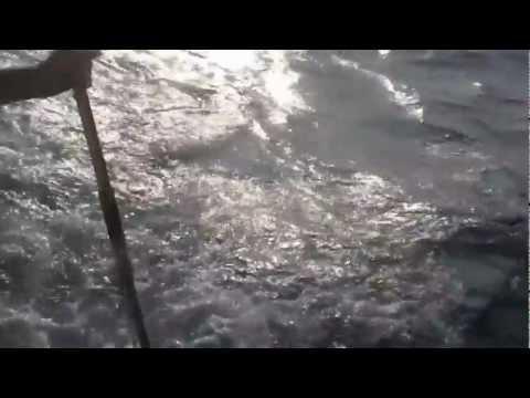 Aruba Fishing Charter