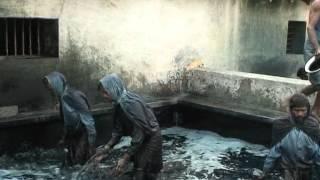 Indigo Dye Extraction