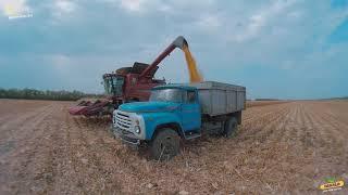 Уборка кукурузы Dekalb