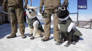 Полицейские собаки в Чили получили зимнюю форму одежды