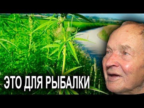 90-летнего профессора философии осудили за выращивание конопли