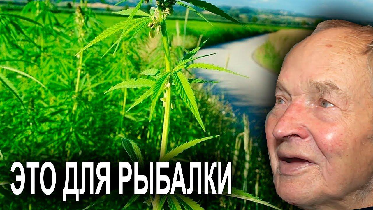 Выращивание марихуаны видео смотреть конопля анубис