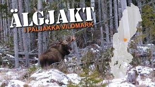Älgjakt i Paljakka vildmark