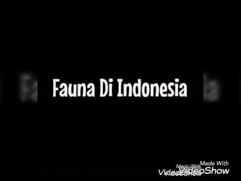 Tugas geografi fauna di indonesia , MAN purwakarta X1 iik 2