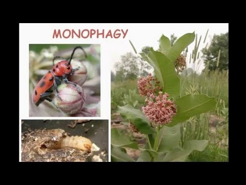Evolutionary Ecology of Plant Defenses