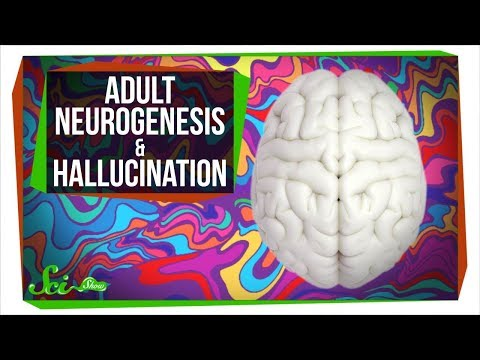 People Grow Brain Cells Well Into Their 80s | SciShow News
