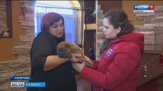 В Кузбассе мошенники предлагают купить породистых щенков