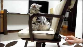 あめちゃん 遊びに夢中になりうっかり椅子から転落してしまいました。も...