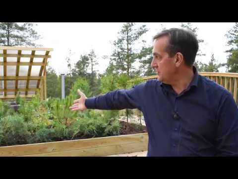 Посадка  растений на крыше строящегося фахверкового дома. ч.1  Выпуск # 40