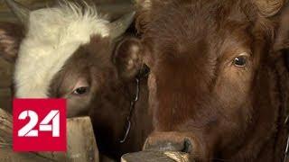 В Татарстане будут бесплатно раздавать корм для фермерских животных - Россия 24