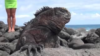 Серхио и морская игуана тихого океана