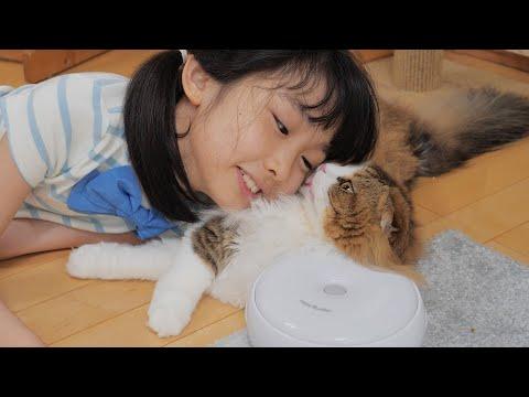 疲れきった娘にもふ枕にされても神のように受け入れる猫