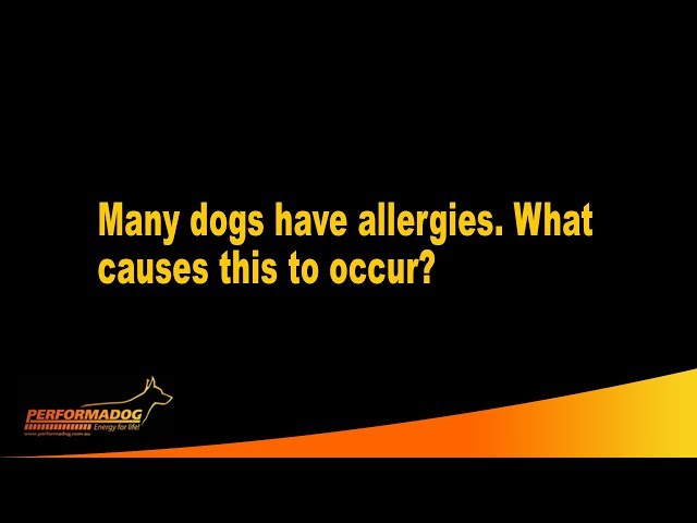 Many dogs have allergies  What causes this to occur?