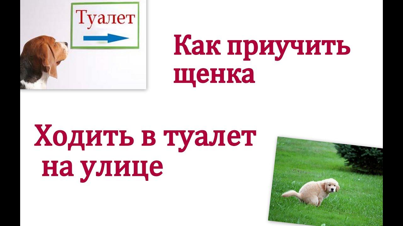 Как приучить щенка ходить в туалет на улицу? - YouTube