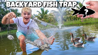 DIY FISH TRAP in My OWN BACKYARD POND!! *fish transfer*