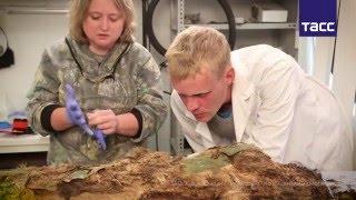 Ученые определят этническую принадлежность ямальской мумии XIII века по ДНК