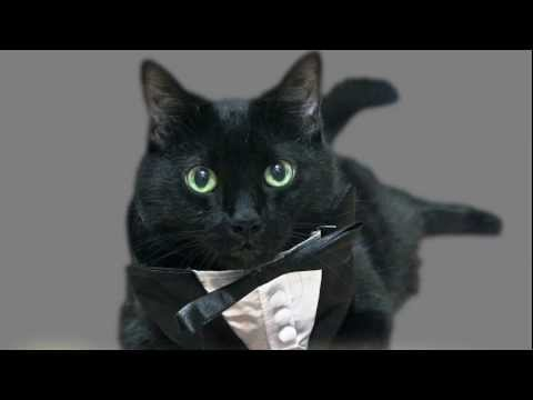 N2 the Talking Cat S3 Ep1 - Cats On Strike