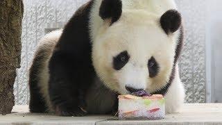 夏はやっぱりコレに限る!王子動物園のパンダ・タンタン、氷のケーキにご満悦