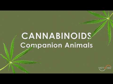 Cannabis - Hemp and Plant Cannabinoids as Potential Interventions in Companion Animals