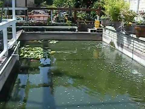 Swimming pool converted into a koi pond youtube for Swimming pool conversion