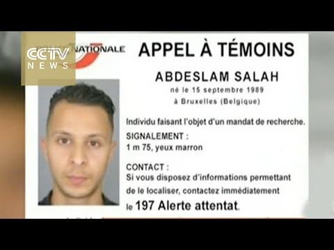 Paris attacks: suspect's DNA found in Belgian raid apartment