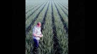 Mexican Onion Crop 2013