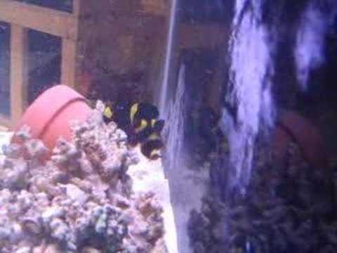 Pre-spawning Behavior?