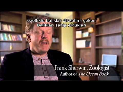 God of Wonders - Turkish
