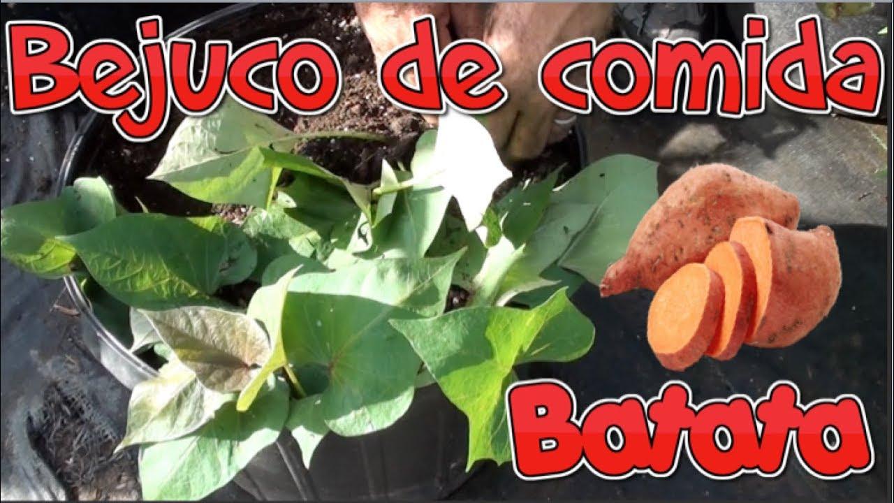 De bejuco a comida, Batata en Tiestos (3ra Parte)