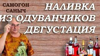 Наливка из одуванчиков дегустация / Рецепты наливок / Самогон Саныч