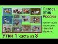 Утки 1 часть из 3 Голоса птиц России mp3
