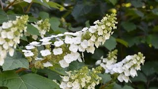 Ecobeneficial Tips: Native Plants For Shade Gardens