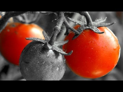 Photoshop Tutorial: How To Easily Color Isolate Red In A Photo