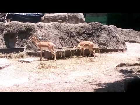 ANIMALES  del el ZOO DE CHAPULTEPEC 2017